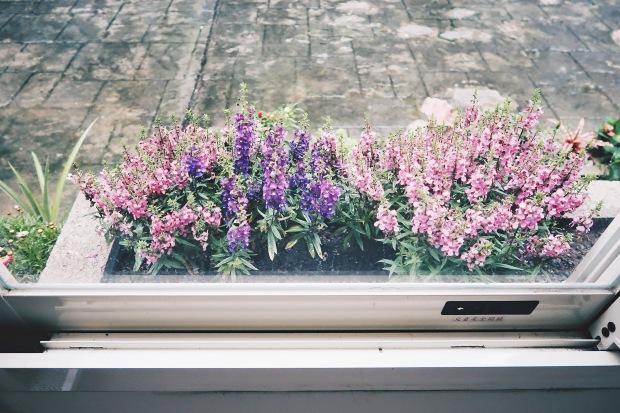 12-7 灰調實驗室_窗台外的花圃