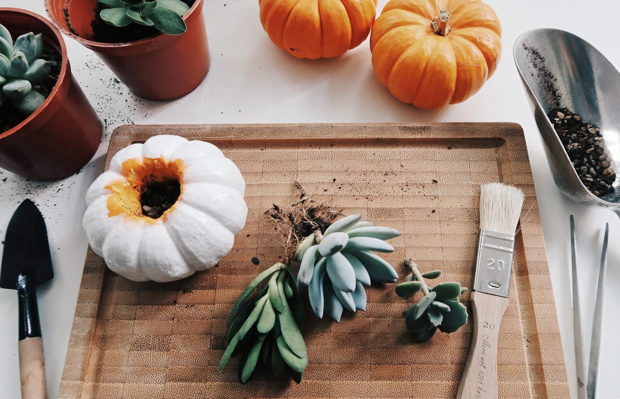 DIY手作教學:萬聖節・白色南瓜多肉盆栽 Pumpkin Planters