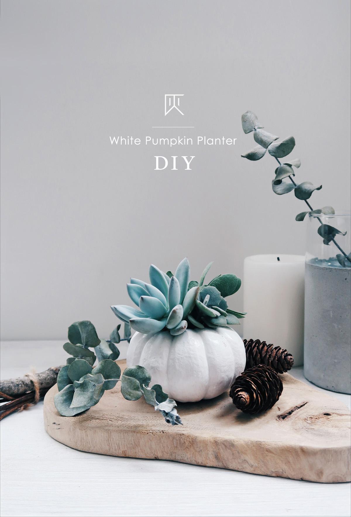 DIY手作教學:萬聖節・白色南瓜多肉盆栽