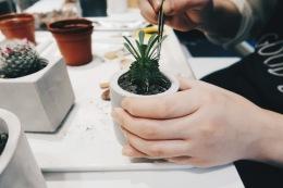 仙人掌植物種植