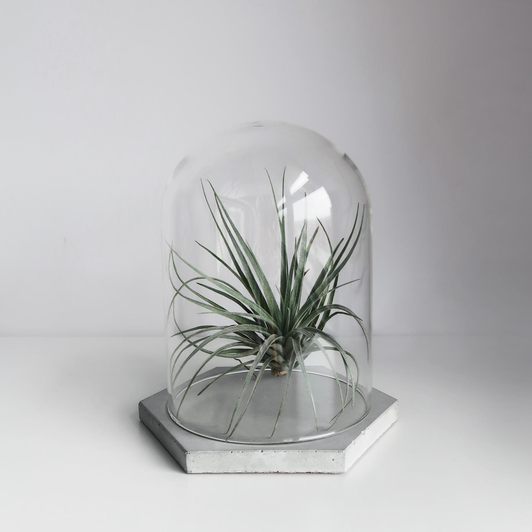 幾何設計水泥飾盤玻璃鐘罩・居家擺飾・飾品陳列