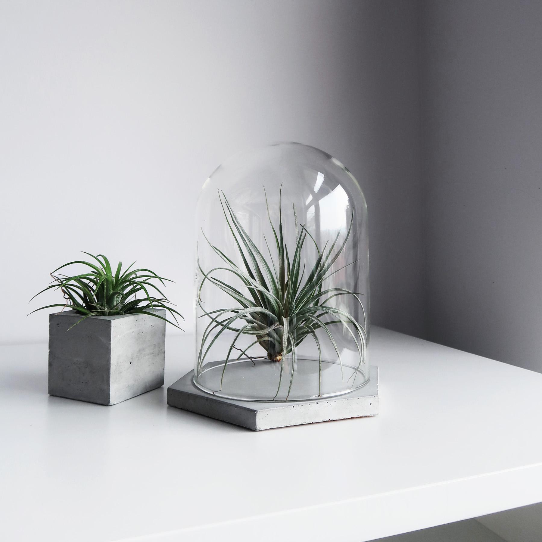 六角水泥飾盤玻璃鐘罩・陳列・展示