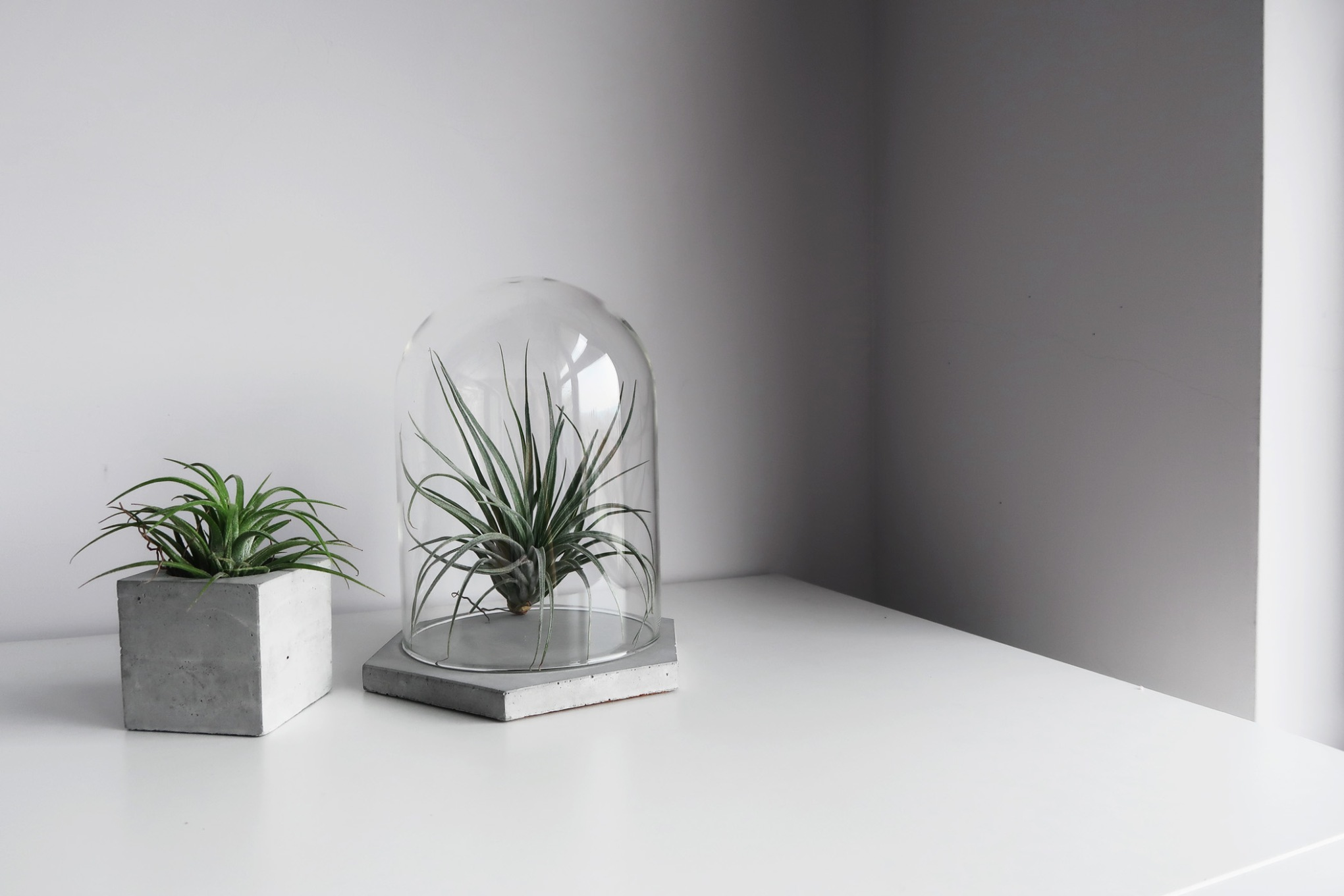 GLASS HOUSE 六角水泥飾盤玻璃鐘罩