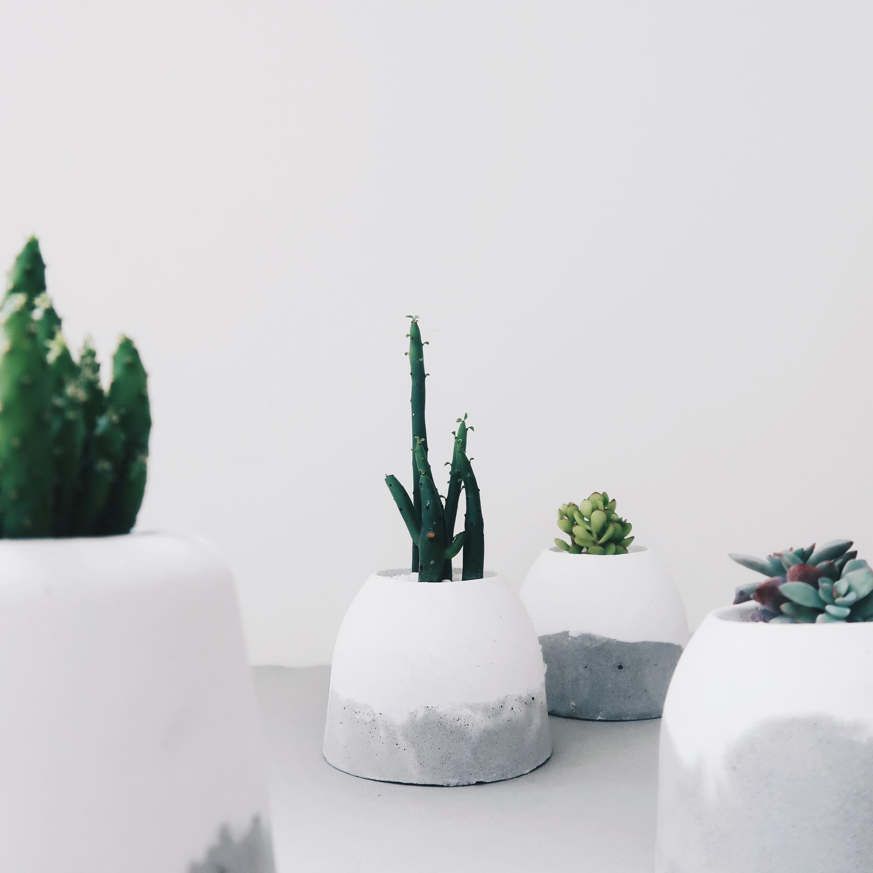 HILL ISLAND 小島山仙人掌雪景水泥盆栽