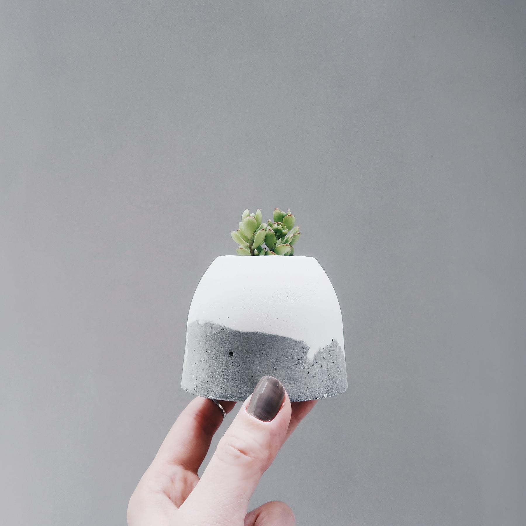 HILL ISLAND 小島山多肉雪景水泥盆栽 / Succulent Snowing concrete planter