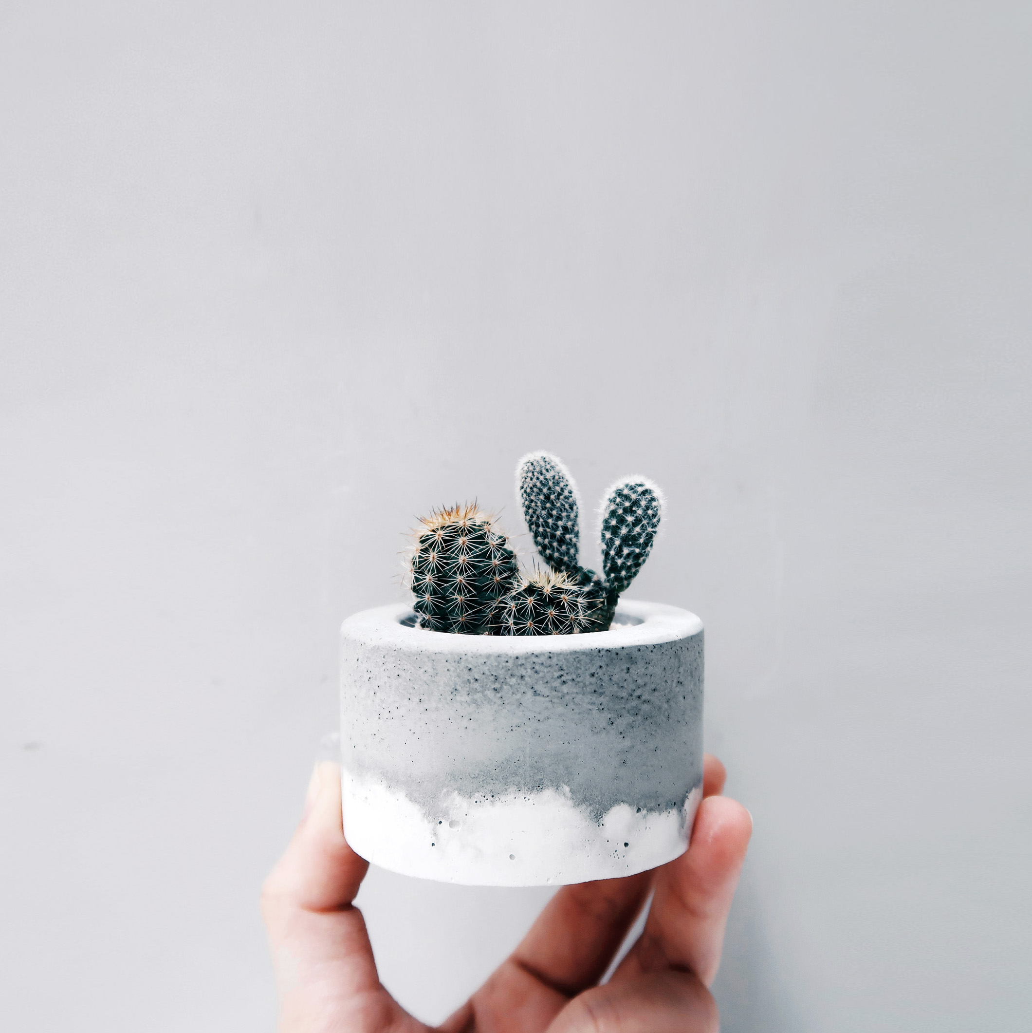 LITTLE CAKE 小圓蛋糕多肉鮮奶油水泥盆栽 / Cream layer Concrete planter