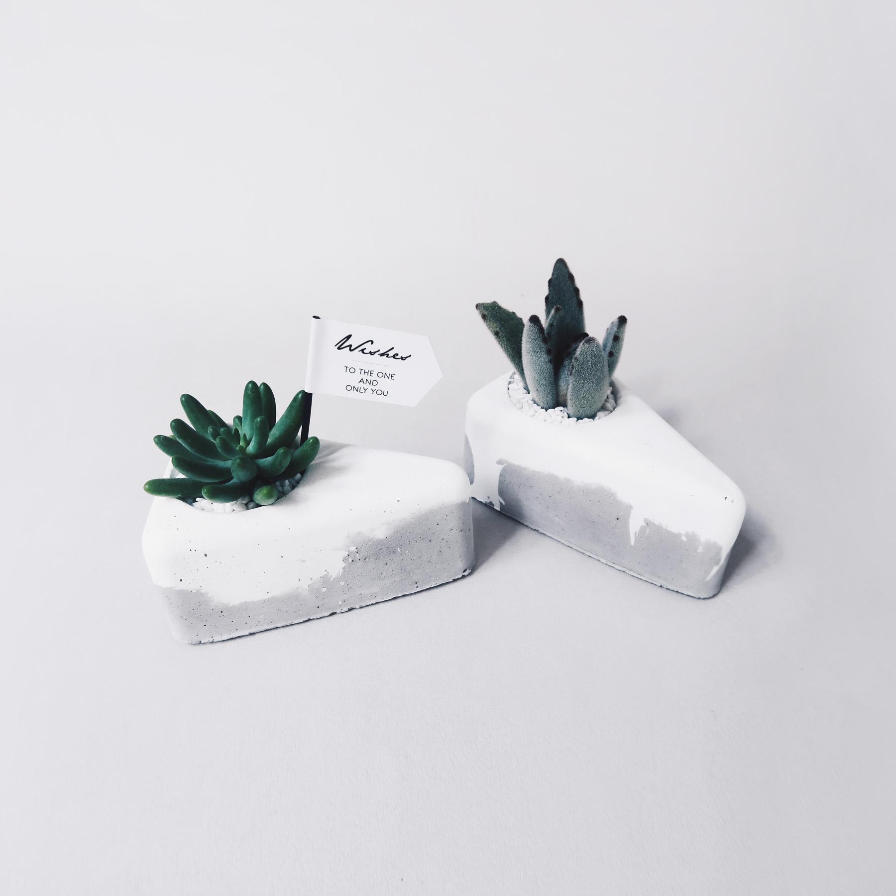 A PIECE OF CAKE 切塊蛋糕 / 仙人掌・多肉雙層鮮奶油水泥盆栽