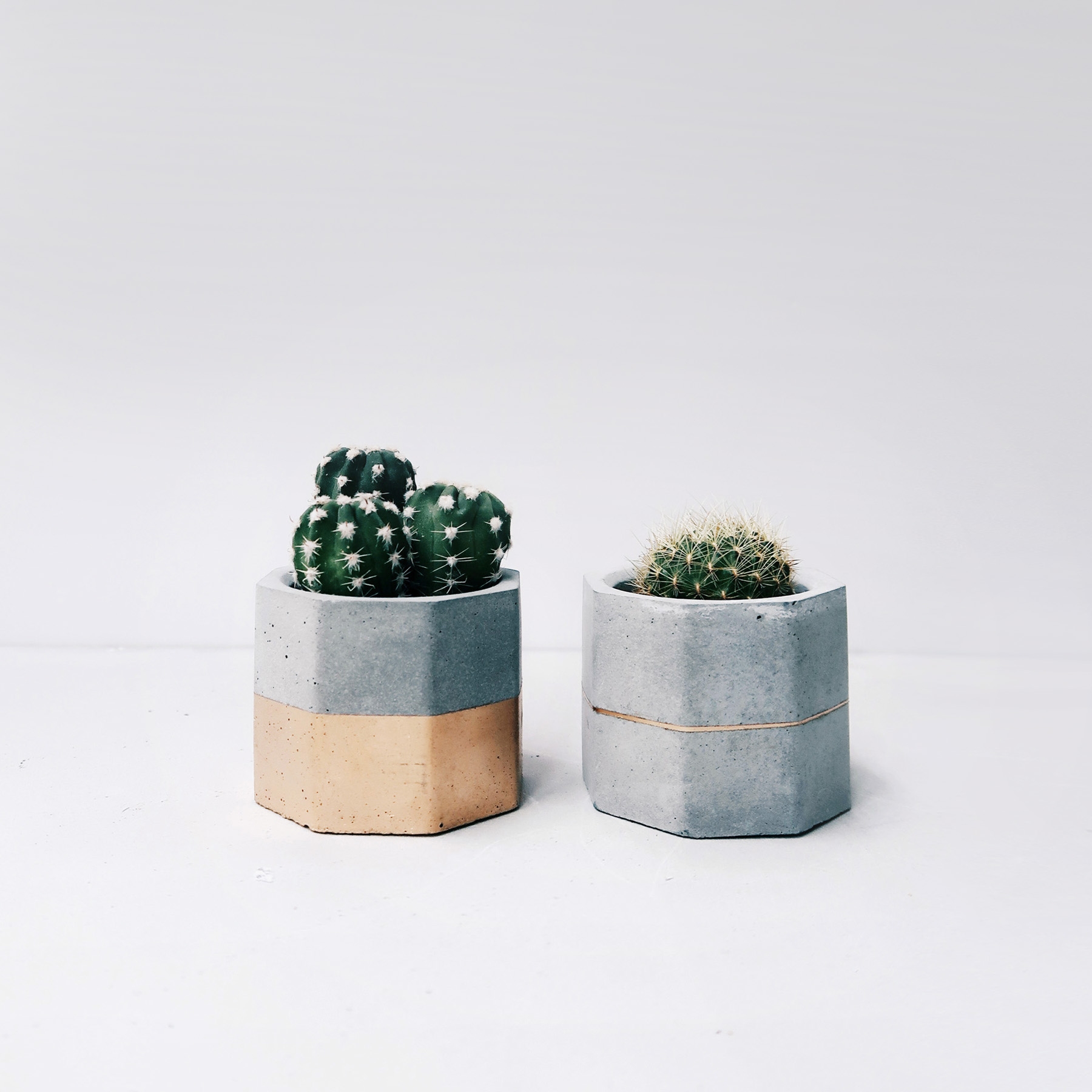 GOLDEN JUBILEE 金色陛下多肉幾何水泥盆栽組 / Succulent Concrete planter set
