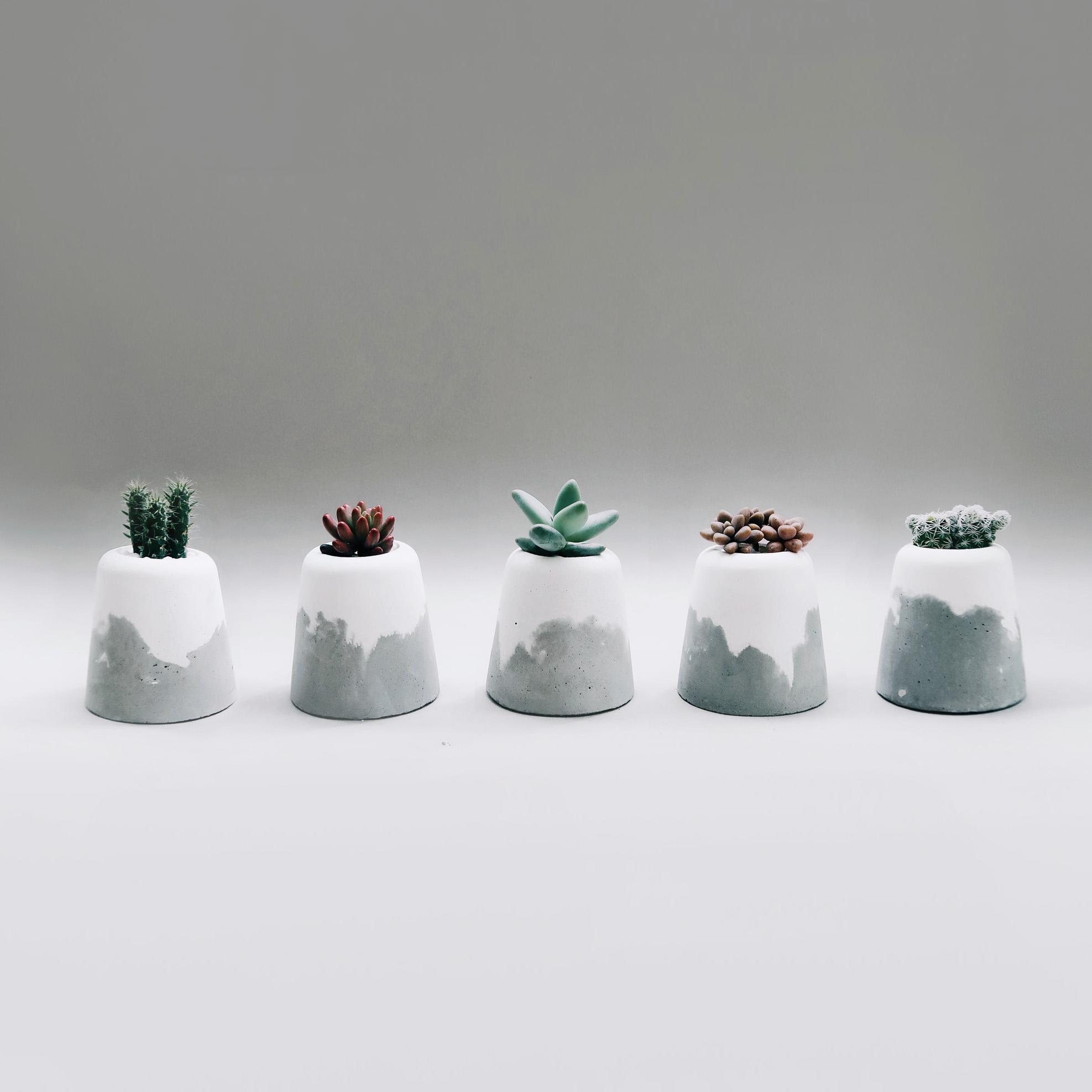 SNOW VOLCAN 小雪火山多肉・仙人掌・空氣鳳梨水泥盆栽 / Succulent Concrete planter