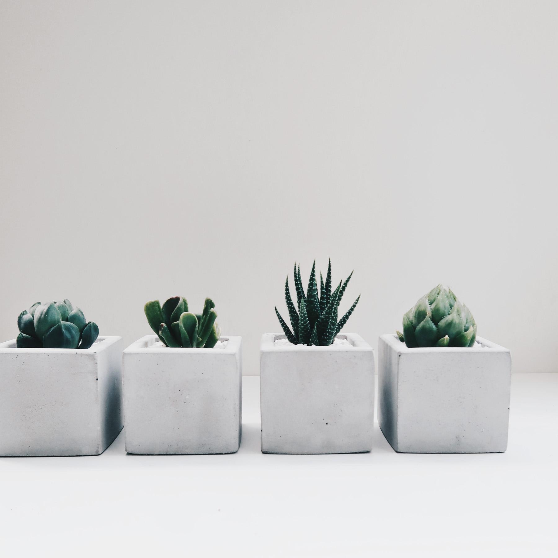 SINGLE HOUSE 單身公寓極簡方形多肉水泥盆栽 / Succulent Concrete planter