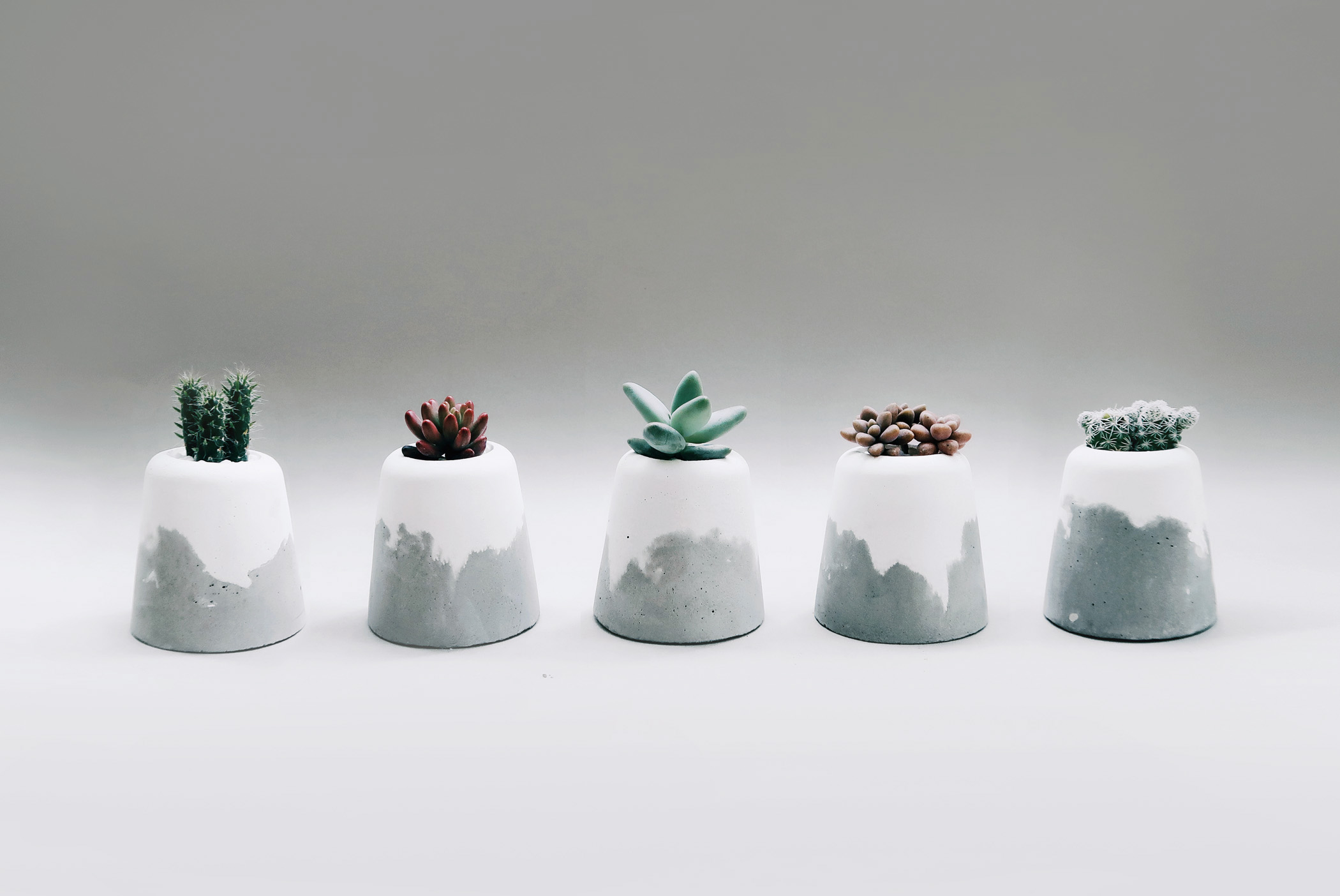 SNOW VOLCANO 小雪火山雙色水泥盆栽