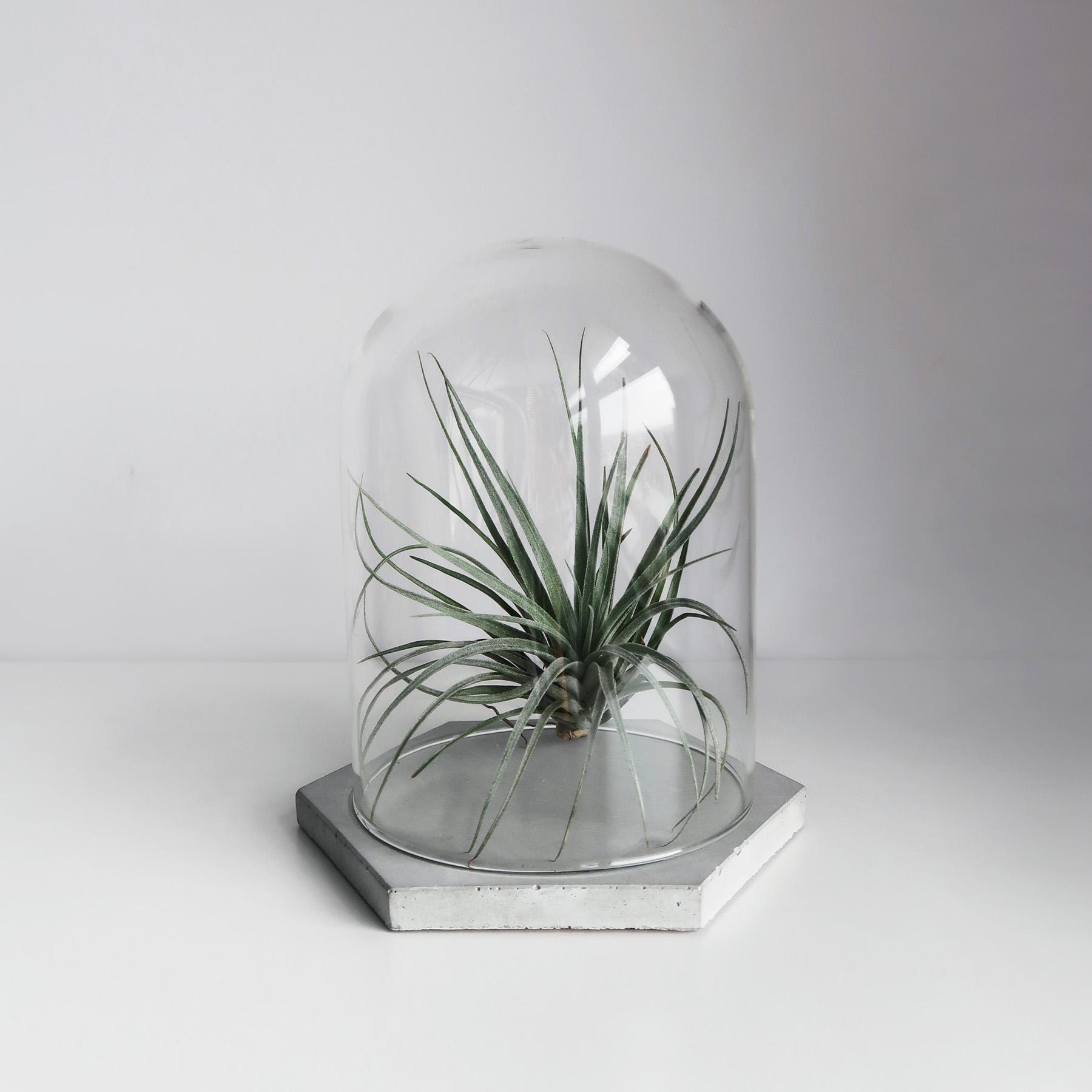GLASS HOUSE 玻璃屋六角水泥飾盤玻璃鐘罩 / Concrete Hexagonal tray with bell jar, Jewelry dish