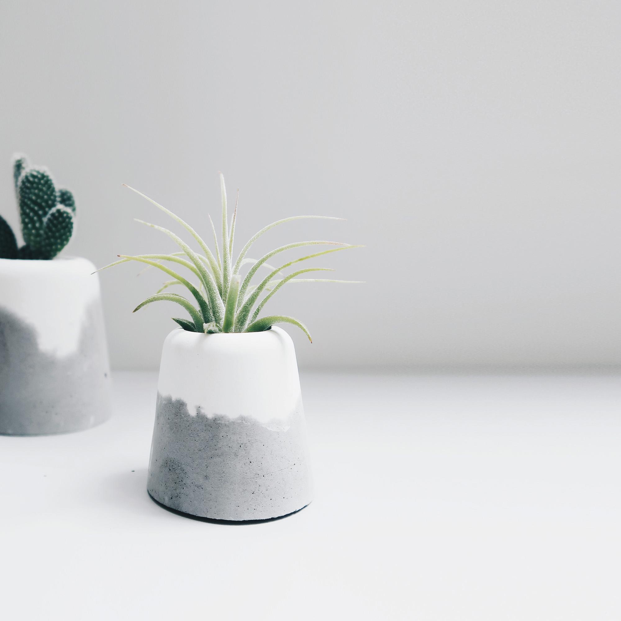 SNOW VOLCAN 雪火山空氣鳳梨水泥盆栽・植栽・禮物