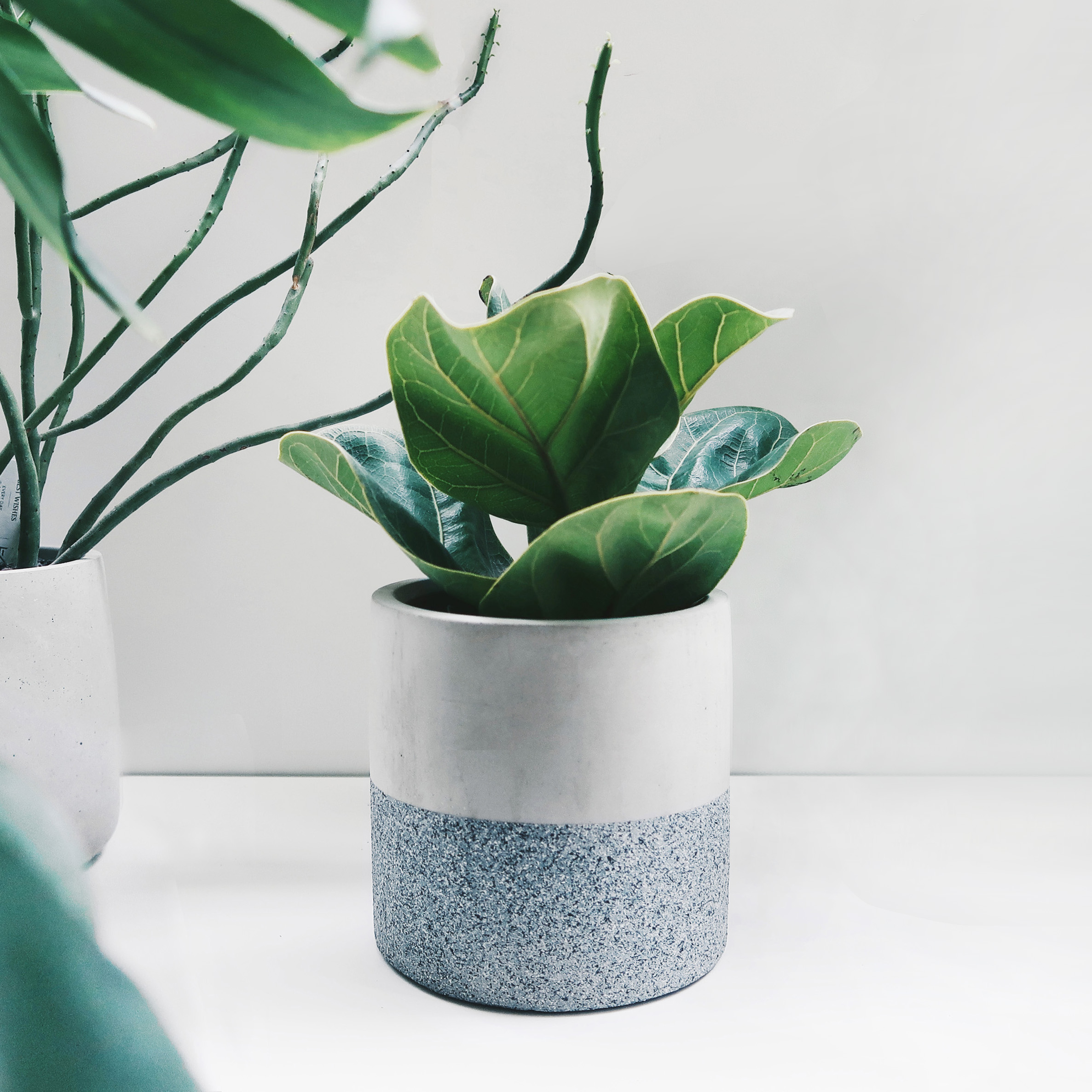 BLUESTAND 藍砂岩深圓雙色水泥盆器・盆栽・花器
