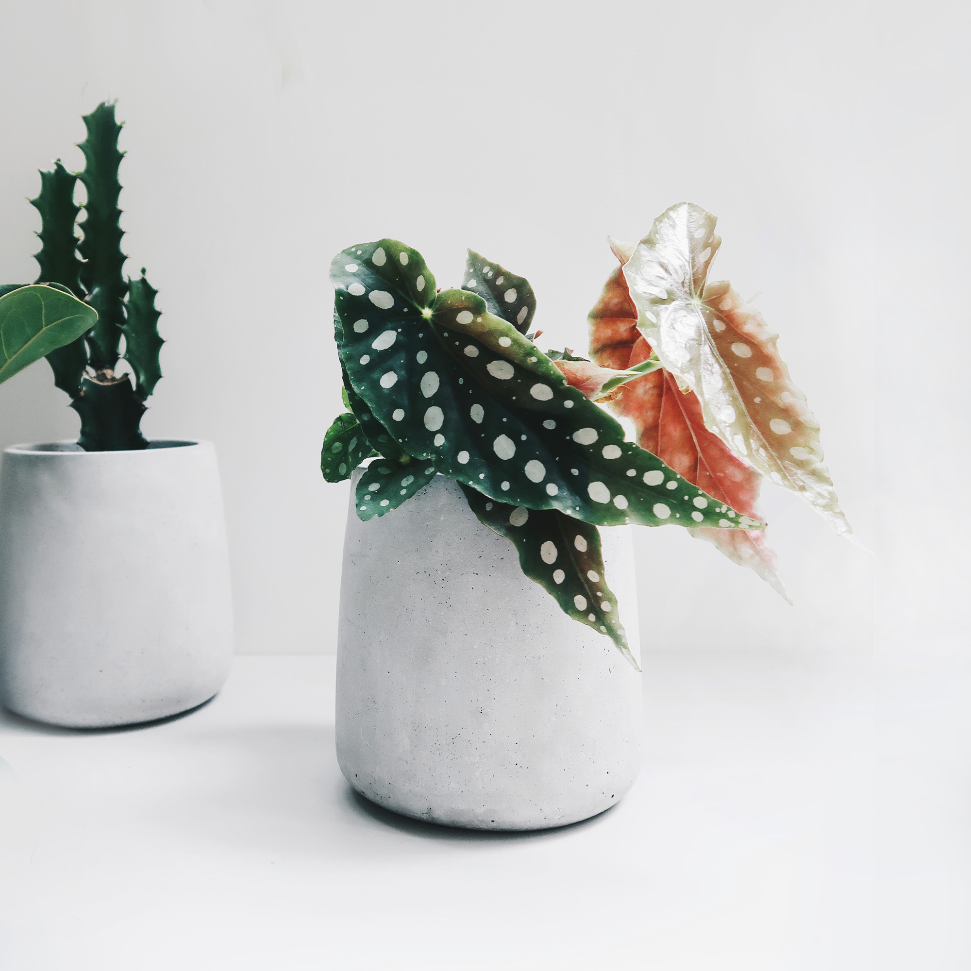 PURE 錐圓水泥設計家飾・盆器・盆栽